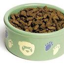 Petware Dish - ferret