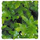 Natural Bushy Congo Ivy - Small 8 - 10""