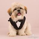 Weddingstar 6006 Small Pet Tux