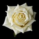 Elegance by Carbonneau clip-401 Rose Bud Medium Hair Clip 401 or Clip/Brooch 401