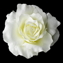 Elegance by Carbonneau Clip-416-Diamond-White Classic Ravish Diamond White Rose Flower Hair Clip - Clip 416