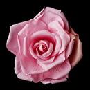 Elegance by Carbonneau Clip-428-Fuchsia-Pink Pink Fower Hair Clip 428