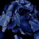 Elegance by Carbonneau Rose-Petals-Royal-Blue-4 Royal Blue Rose Petals (100 Count) #4