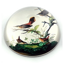 Parastone PAUD1 Winter Wrens Glass Paperweight by JJ Audubon