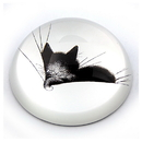 Parastone PDUB4 Kitty Sleeping on Pillow Glass Paperweight by Dubout