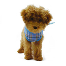 GOGO Mesh Dog Harness Vest, Adjustable Dog Harnesses And Leashes