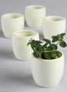 Ivy Lane Design Plain Round Flower Pots - 5 pk