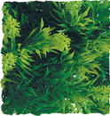 Zoo Med Natural Bush Malaysian Fern Plant - Green - Medium/18 Inch
