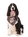 BuySeasons 580573S-M Life Of The Pawty Bandana Pet Costume