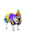 BuySeasons 580661LXLXL Brazilian Bombshell Pet Costume