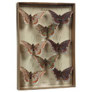 Benjara BM229350 Feather 8 Piece Butterfly Accent Decor with Specimen Box, Purple