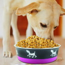 Boomer N Chaser BNC-10003-24 Stainless Steel Pet Bowl with Anti Skid Rubber Base and Dog Design, Gray and Pink-Set of 24