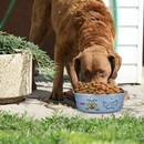 Boomer N Chaser BNC-10006-4 Multi Print Stainless Steel Dog Bowl By Boomer & Chaser-Set of 4