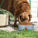 Boomer N Chaser BNC-10007-6 Multi Print Stainless Steel Dog Bowl By Boomer & Chaser-Set of 6