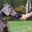 Boomer N Chaser BNC-10009-4 Plastic Fin Cap Pet Travel Water Bottle in Stainless Steel, Large, Silver and Black-Set of 4