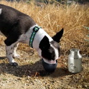 Boomer N Chaser BNC-10010-2 Plastic Fin Cap Pet Travel Water Bottle in Stainless Steel, Small, Silver and Black-Set of 2