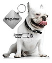 Chicago Bulls Pet Collar Charm