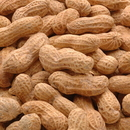 Azar Roasted Salted Peanut In The Shell 25 Pound Bag - 1 Per Case