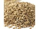 Wheat Montana Organic Bronze Chief Kernels 50lb, 155008