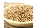 Wheat Montana Prairie Gold (86) Kernels 25lb, 155009