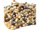 Amish Country Popcorn Rainbow Popcorn 50lb, 496512