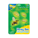 Insect Lore ILP02215 Bee Life Cycle Stages