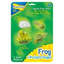 Insect Lore ILP2610 Frog Life Cycle Stages