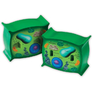 Learning Resources LER1901 Plant Cell Crosssection Model