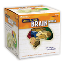 Learning Resources LER1903 Human Brain Crosssection Model