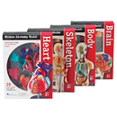 Learning Resources LER3338 Model Anatomy Bundle Set Of 132