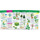 New Path Learning NP-943501 All About Plants Set Of 5