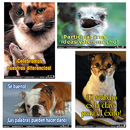 Poster Pals PSZBB10 Spanish Fun Photo Posters Set 10