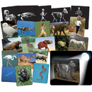 Roylco R-59250 Whats Inside Animals