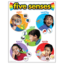 Trend Enterprises T-38051 Chart Five Senses 17 X 22 Gr Pk-2