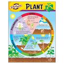 Trend Enterprises T-38179 Chart Life Cycle Of A Plant K-3