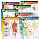Trend Enterprises T-38913 Chart Pk The Human Body 7/Pk 17X22 Gr 5-8