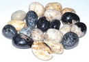 AzureGreen GTPALRB 1 lb Palm Root fossil tumbled