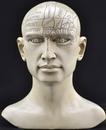 AzureGreen RH281 Phrenology Head