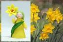Eco Flower Fairies Daffodil Fairy (standing felt doll, holding flower)