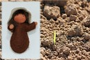 Eco Flower Fairies Seed Baby (wrapped felt doll)