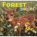 NATIONAL BOOK NETWRK 9781559718745 Forest Babies