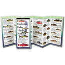 Earth Sky+Water Folding Guide Fish Northwest, 524531