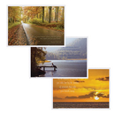 Hoffmaster 702086 Inspirational Multipack Placemat, 3 designs per case, Cedar Grove