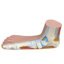 Anatomical Model 12-4804 Anatomical Model - Flat Foot (Pes Panus)