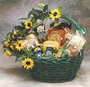 Gift Basket 81091 Sunflower Treats Gift Basket - Large