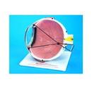 Hilco Vision 1032240 Lasik Eye Model
