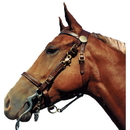Shenandoah Leather Halter Bridle Combo Cob