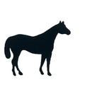 Intrepid International Horse Magnets - Lg Face Right Black