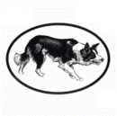 Intrepid International Dog Decal - Border Collie