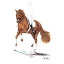 Haddington Green Equestrian Art Jan Kunster Horse Prints - Rheingold (Dressage)
